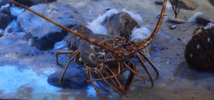 Pescaturismo in catamarano e Luxury Yacht al largo di Ischia. Un tour privato con i pescatori, scoprendo segreti e tradizioni e personal chef